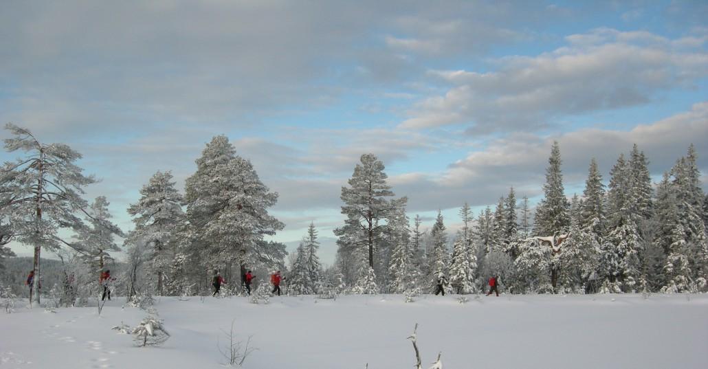 VInterlandskap med snødekte trær